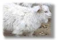 Le Fil Amalric - Spécialiste des fibres naturelles